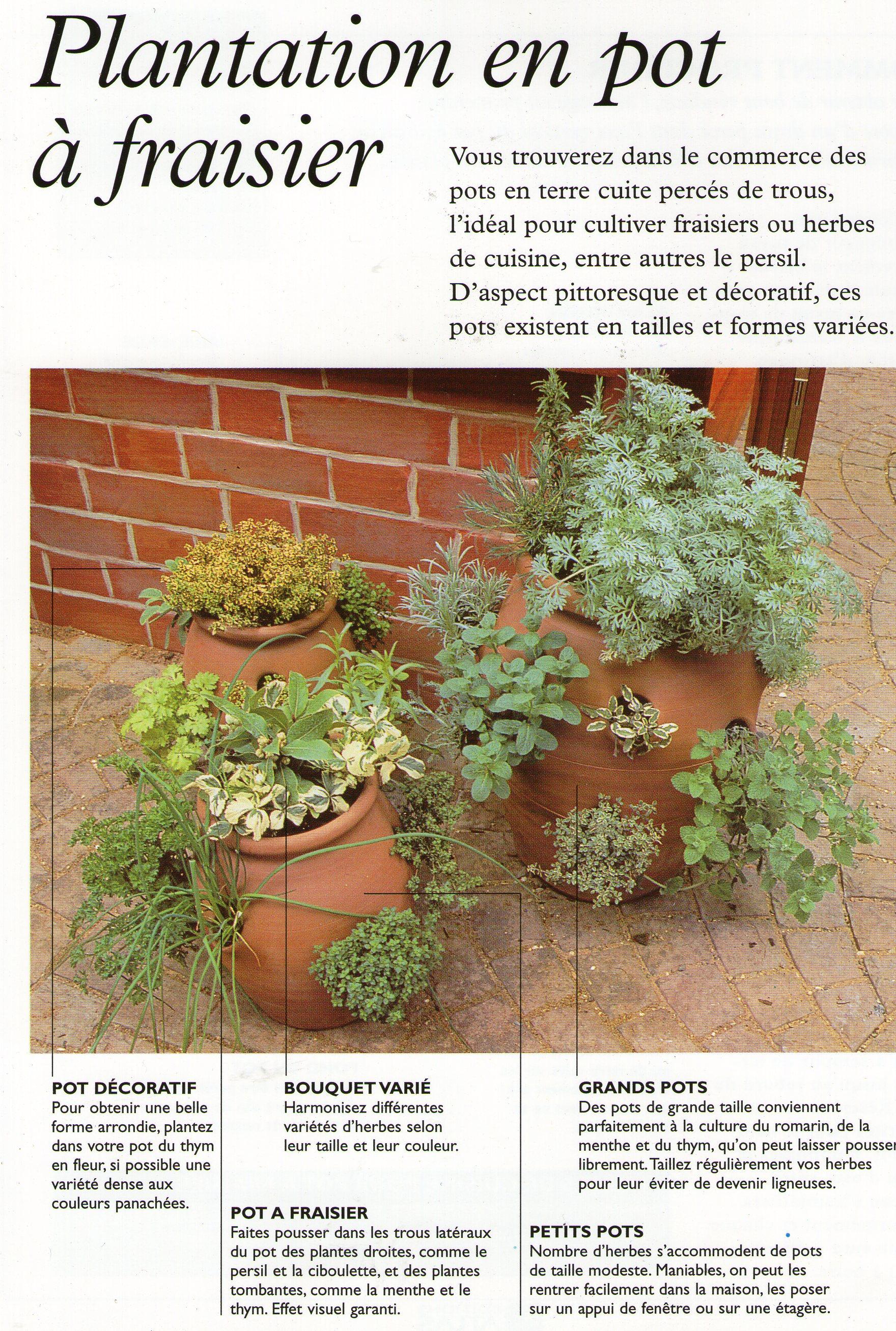 plantation herbes aromatiques trucs et conseils colos. Black Bedroom Furniture Sets. Home Design Ideas